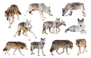 wolfsrudel teambuilding